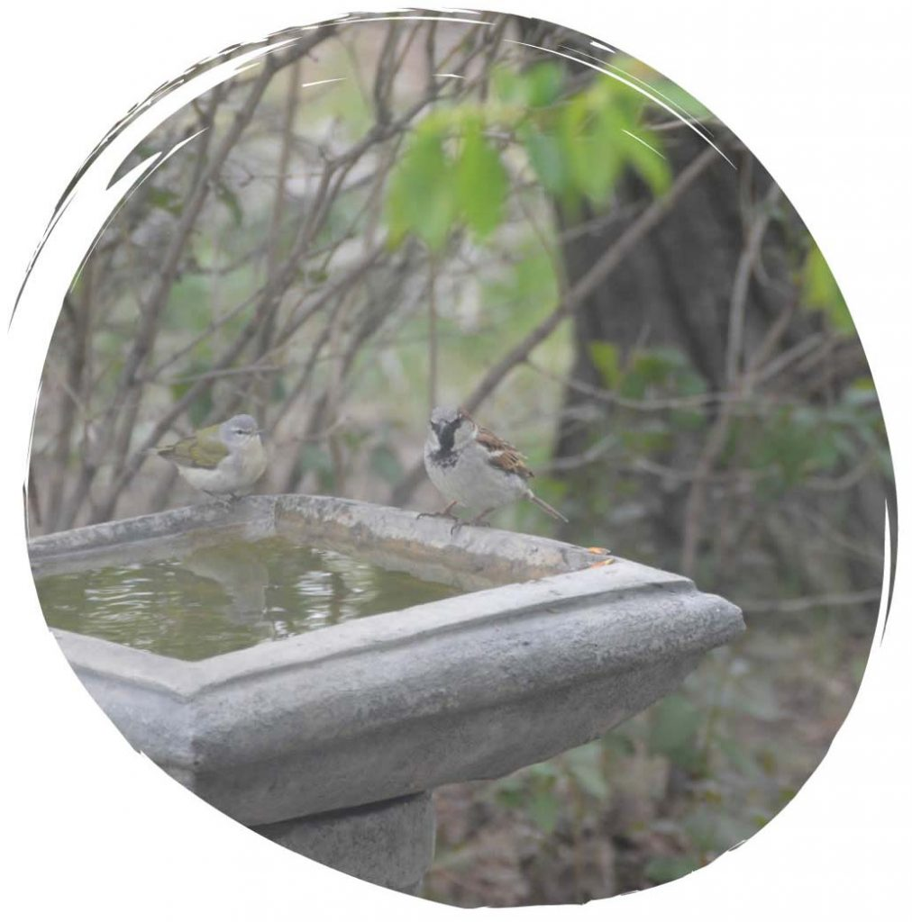 Amenities include bird watching at the bird bath at Sky Story Bed & Breakfast